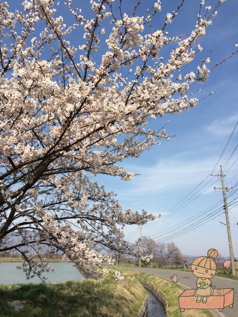 ボッコちゃんと東御の桜