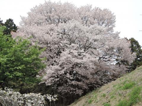 平成28年4月10日北の谷敬老花見会⑤