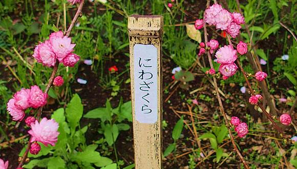 向島百花園(4)-2
