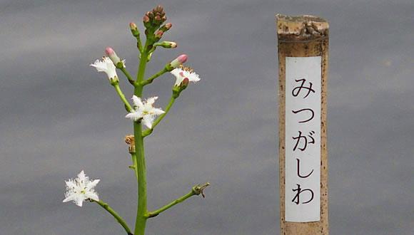 向島百花園(4)-3
