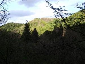 160505山の緑