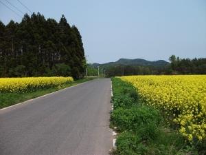 160519菜の花の道