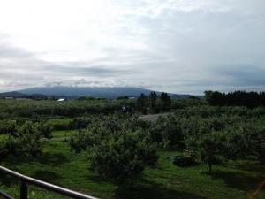 160623りんご畑