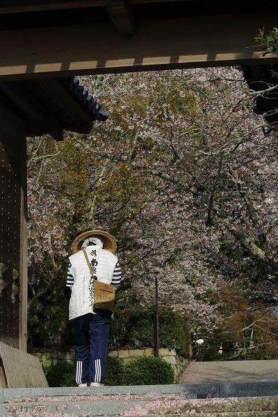 繁多寺ソメイヨシノ 160408 04