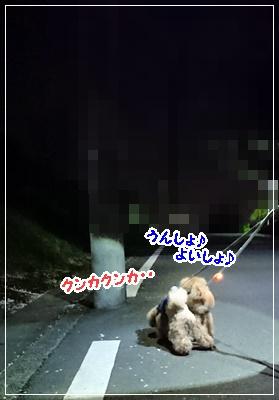 DSC_0419 (2)
