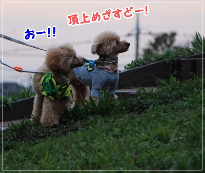 IMG_8565 (2)