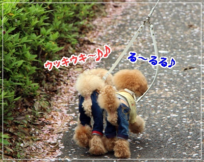 IMG_8641 (2)
