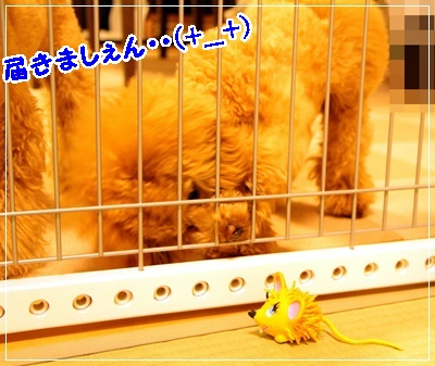 IMG_9414 (2)