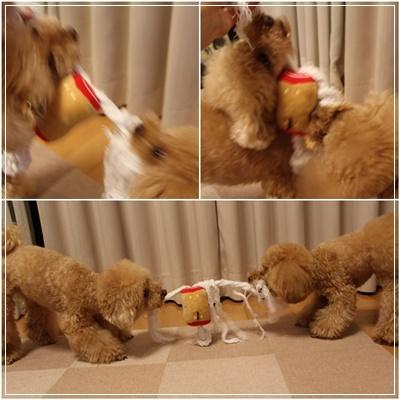 おもちゃ争奪戦