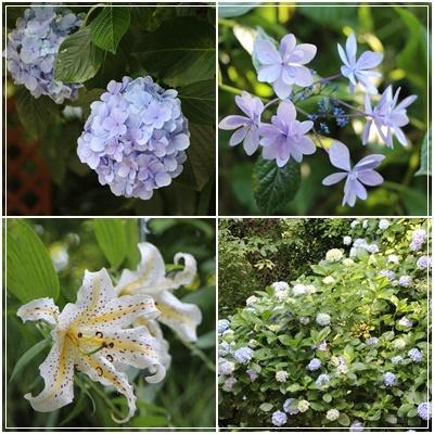 樹ガーデンお花