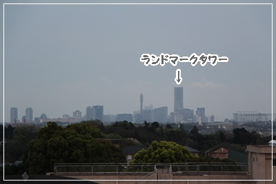 IMG_8583.jpg