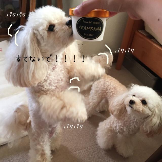 犬用のアイスには賞味期限アリ!だった。。。3