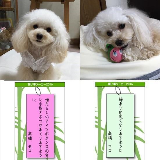 2016七夕願い事メーカー