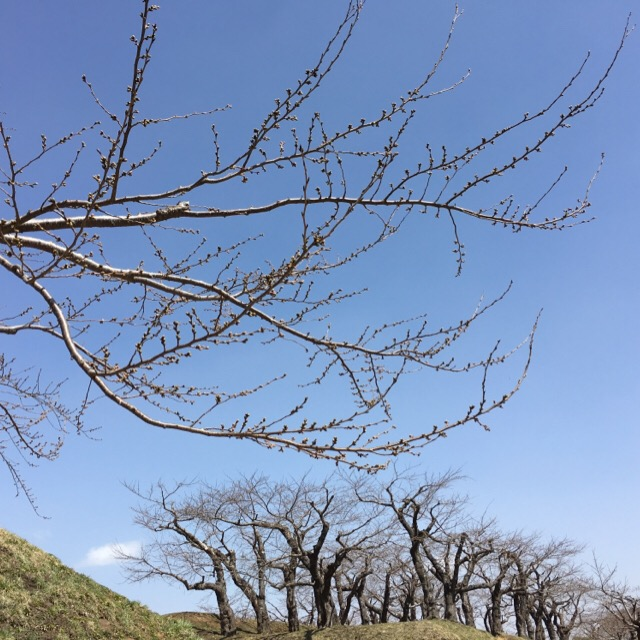 2016.4.9 五稜郭2