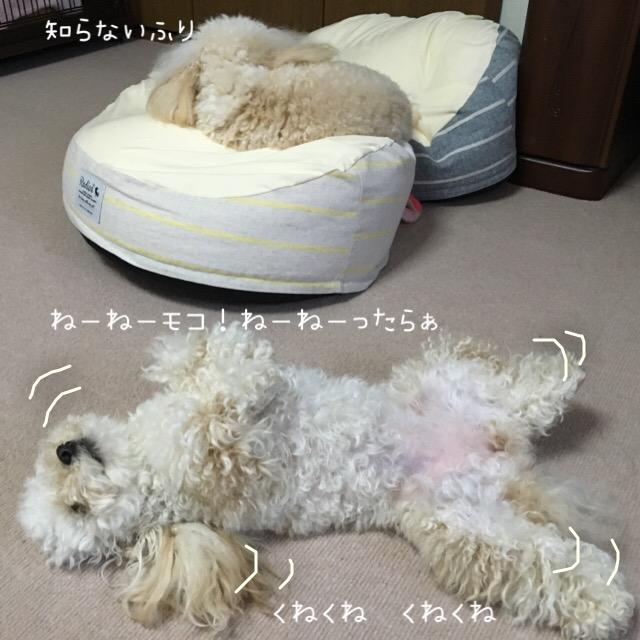 2016.4.14 ココモコ ココくねくね2