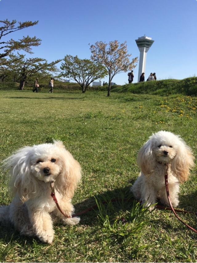 五稜郭公園 お散歩 2016.5.14 1