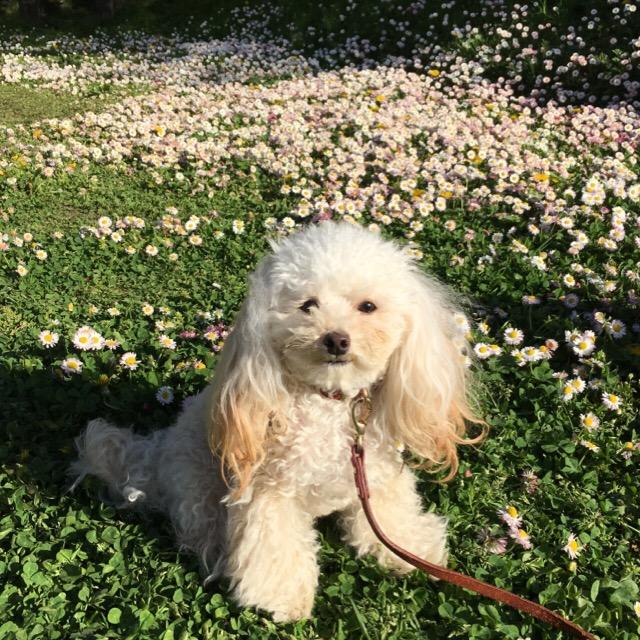 五稜郭公園 お散歩 2016.5.14 3