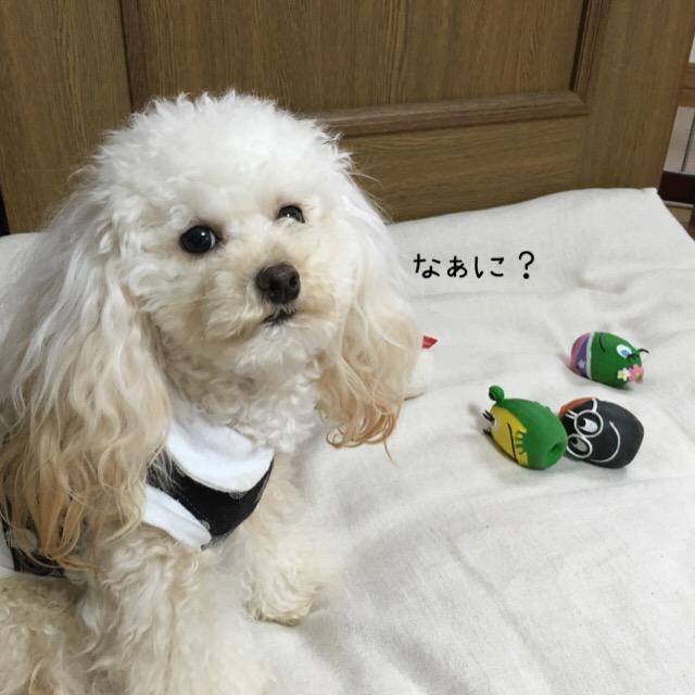 ココモコ家マイホーム1