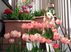 春の囲み写真 16