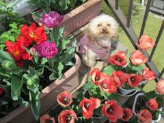 春の囲み写真 16 2
