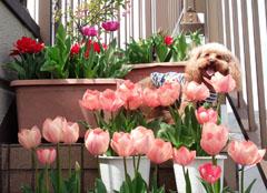 春の囲み写真 16 6