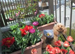 春の囲み写真 16 7