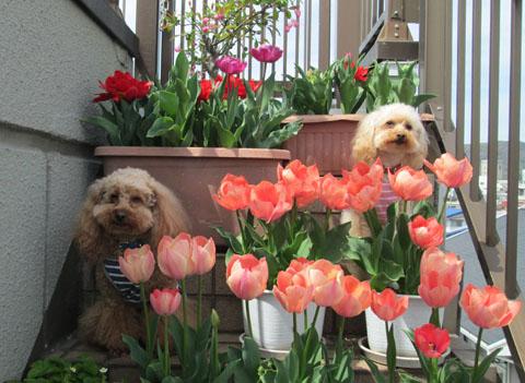 春の囲み写真 16 8