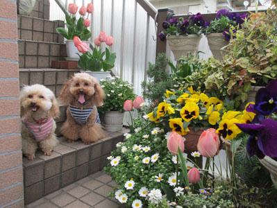 母待ち 春の写真