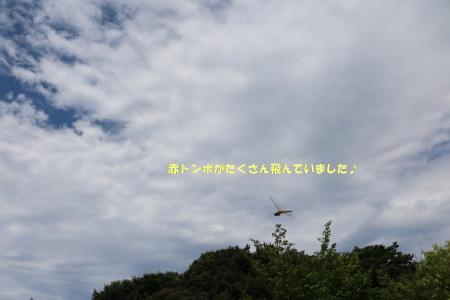 160703-5.jpg