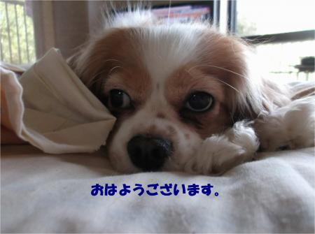 01_convert_20160406180235.jpg