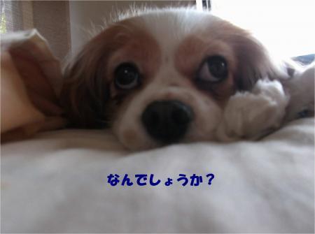 02_convert_20160406180247.jpg