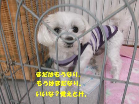 04_convert_20160405185759.jpg