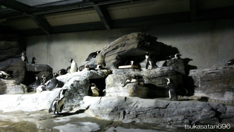 20150504_penguin_01