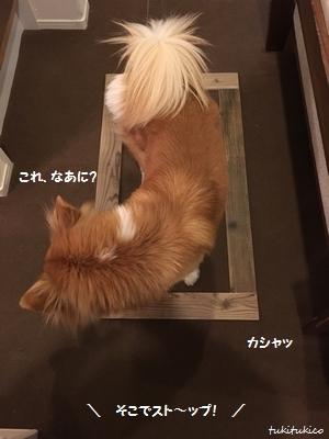 和室の窓5
