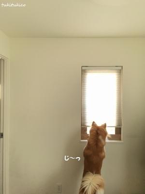和室の窓10