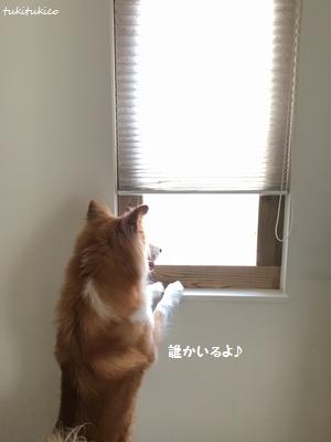 和室の窓11