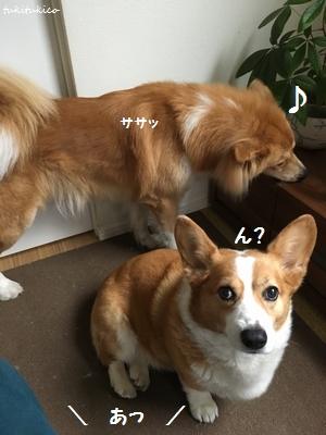 シャンプー&リンス5