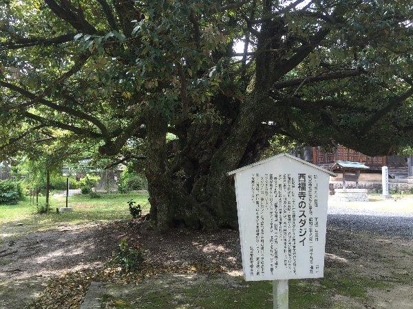 saifukugi-tsuruga-027.jpg