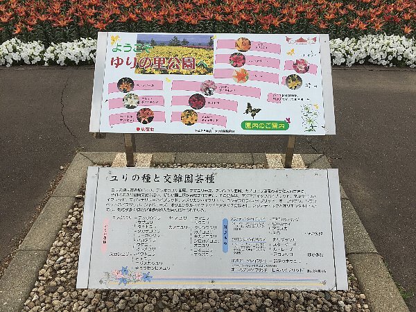 urinosato-harue079.jpg