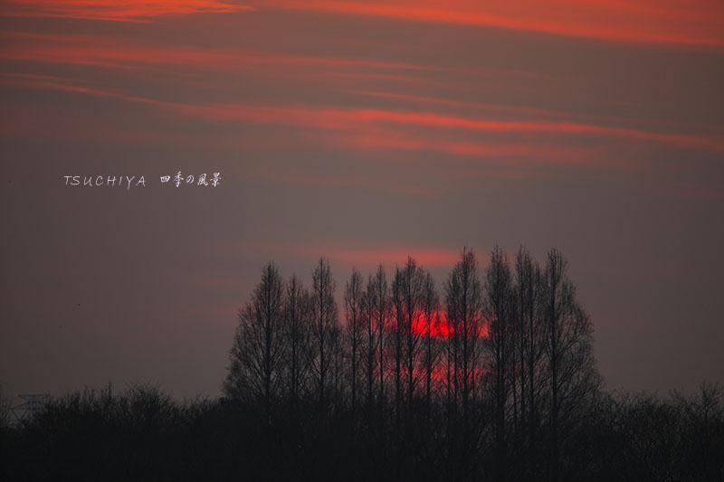秋ヶ瀬公園の夕日 4