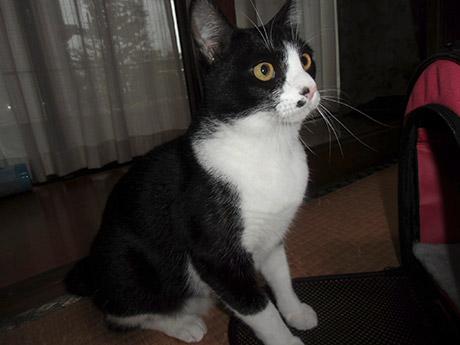 9か月の先住猫のハナちゃん