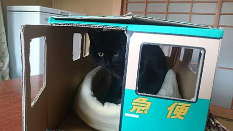 リアルクロネコヤマトの黒猫ジジ君
