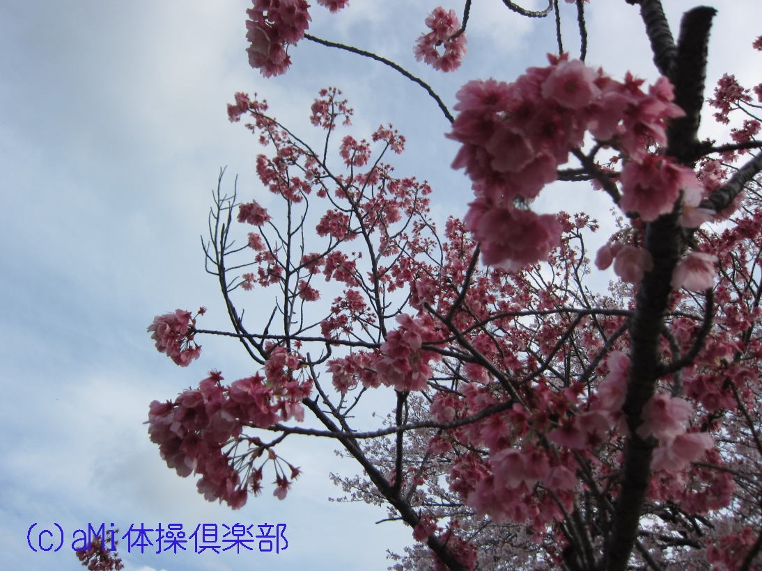 IMG_7893-1.jpg