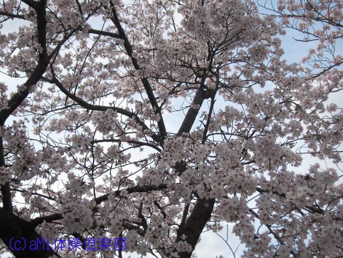 IMG_7903-1.jpg