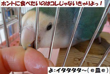 青菜うり3