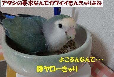 青菜うり4