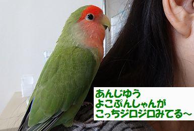 横浜オフ会15