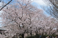 2016花見5