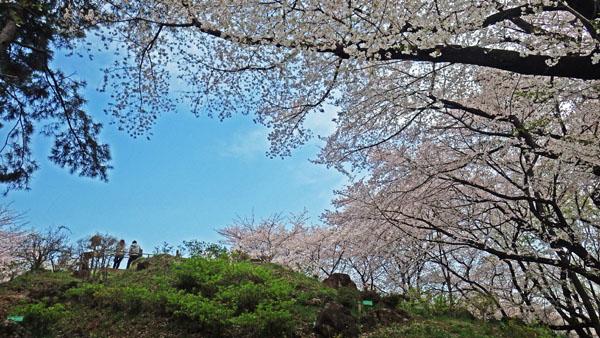 箱根山とサクラ