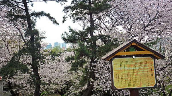 箱根山頂上から高層ビル